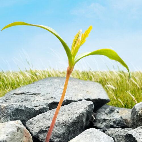 Persönliche Entwicklung zu Ihrer Führungskultur machen
